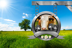 Dairy Products - Metal Sign in Countryside Stock Photography