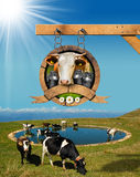 Dairy Products Sign with Grazing Cows Stock Photos