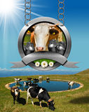Dairy Products Sign with Grazing Cows Royalty Free Stock Photos