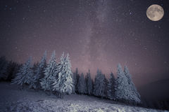 Dairy Star Trek in winter woods Royalty Free Stock Photo