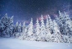 Dairy Star Trek in the winter woods. Carpathians, Ukraine, Europ Stock Photography