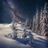 Dairy Star Trek in the winter woods. Carpathians, Ukraine, Europ Royalty Free Stock Images