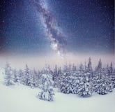 Dairy Star Trek in the winter woods. Carpathians, Ukraine, Europ. E Royalty Free Stock Photography