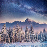 Dairy Star Trek in the winter woods. Carpathians, Ukraine, Europ Stock Images