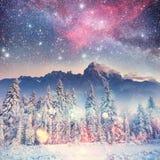 Dairy Star Trek in the winter woods. Carpathians, Ukraine, Europ Royalty Free Stock Photo