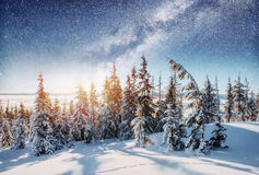 Dairy Star Trek in the winter woods. Dramatic and picturesque sc. Ene. In anticipation of the holiday. Carpathian, Ukraine, Europe stock image