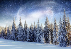 Dairy Star Trek in the winter woods. Dramatic and picturesque sc stock images