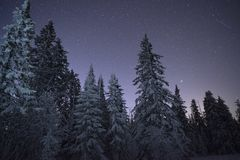 Dairy Star Trek in the winter woods. stock image