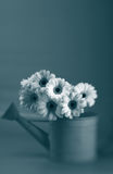 Daises in Black and White Stock Photography