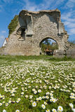 Daises and Ruins Royalty Free Stock Photo
