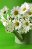 Daises in watering can. A green watering pail full of white and yellow daises Royalty Free Stock Image
