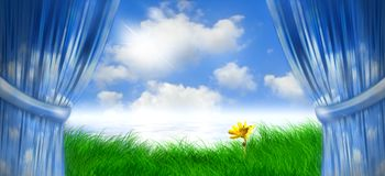 daisey dnia wiosny Zdjęcie Stock
