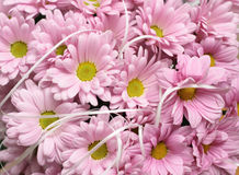 Daisie. In the photo background of pink daisie Stock Photo