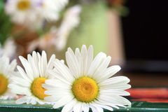 Daisies. Fresh picked daisies laying on top of a book that's on a table Stock Images