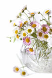 Daisies. Delicate little daisies in a round crystal vase,  with white background.  This is erigeron karvinskianus, or Australian daisy Stock Image