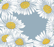 Daisies. Background with hand-drawn daisies Stock Photo