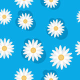 Daisies. The background of daisies, seamless texture Royalty Free Stock Images