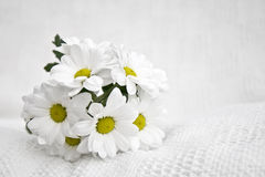 Daisies. A small bouquet of white daisies on a white cloth stock photo