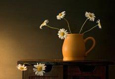 Daisies. Still life with daisies Stock Photos