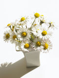 Daisies. Fresh Daisies standing in vase Royalty Free Stock Photography