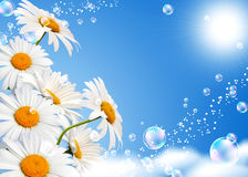 Daisies against the sky Royalty Free Stock Images