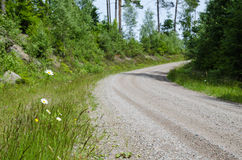 Daisies along gravel road side Stock Images