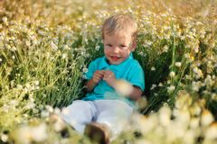 Daisies and baby Royalty Free Stock Image