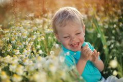 Daisies and baby Stock Photo