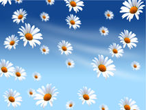 Daisies background Royalty Free Stock Photo