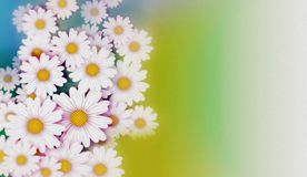 Daisies Background Illustration Royalty Free Stock Photo