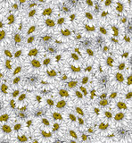 Daisies Background Ink Drawing Stock Photography