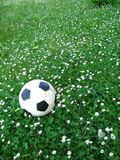 Daisies and ball. Ball on the daisies - meadow, bellis perennis royalty free stock images