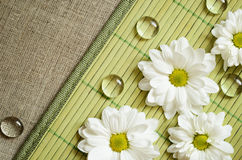 Daisies on a bamboo mat Stock Photos