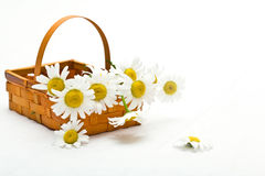 Daisies in a basket Stock Photography