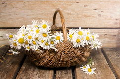 Daisies in a basket Royalty Free Stock Photography