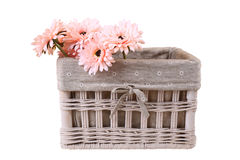 Daisies in basket, isolated Royalty Free Stock Images