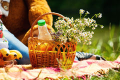 Daisies in a basket on a picnic,Wild flowers in the basket. Picnic on spring time Stock Photo