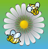 Daisies with bees background. White daisies meadow with bees background Royalty Free Stock Photography