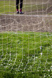 Daisies behind the goal net Royalty Free Stock Photography
