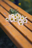 Daisies On a Bench Stock Photos