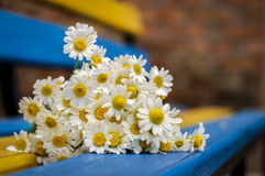 Daisies on the bench, background Royalty Free Stock Images