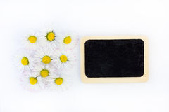 Daisies and a blackboard. Lying in front of white background Royalty Free Stock Image