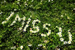 Daisy blossoms forming `I miss U` on green grass royalty free stock photo