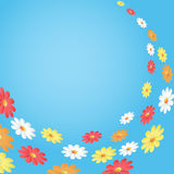Daisies on blue background. Royalty Free Stock Images