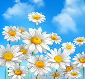 Daisies On Blue Sky. White daisy chamomile flowers on blue sunny summer sky background vector illustration Stock Photo