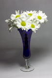 Daisies in a blue vase Stock Photography