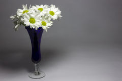 Daisies in a blue vase Royalty Free Stock Photo