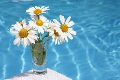Daisies by Blue Water Royalty Free Stock Image
