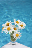 Daisies by Blue Water Royalty Free Stock Photography