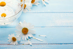 Daisies on the blue wooden table Stock Photo